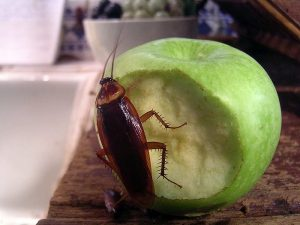 What Do Roaches Eat